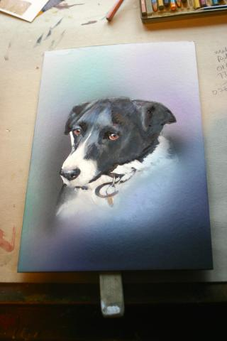 Pet portrait - Fern the Collie  - painting in progress 14